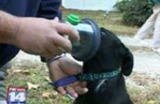 Emergency Crews Add Oxygen Masks for Pets