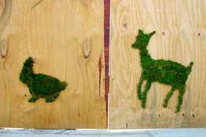 Grassiti Moss Art