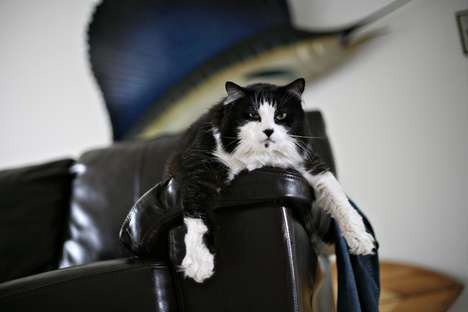Pets on Furniture Photos