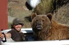 Grizzly Bear Buddies