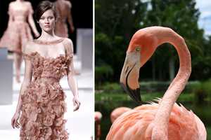 Haute Couture Spring 2011 Shows in Paris Get Wild