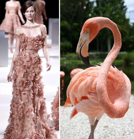 haute couture animal fashion