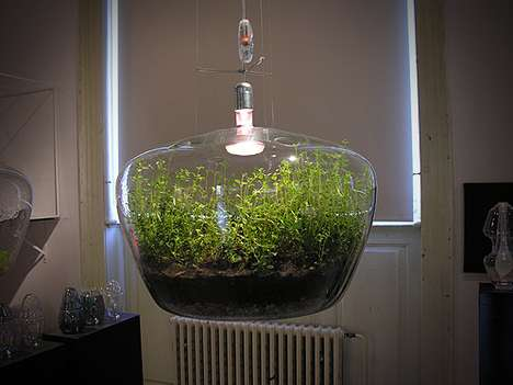 pendant glass light terrariums