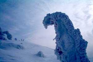 The Snow Monsters of Japan are an Amazing Natural Wonder