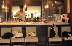 Pet Store Cafes - The Felis Ristorante and Cat Lounge Lets You Drink Tea and Cuddle Pets