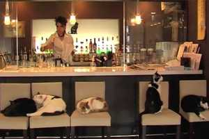 The Felis Ristorante and Cat Lounge Lets You Drink Tea and Cuddle Pets