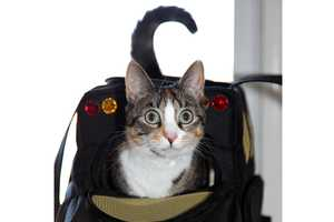 These Mommy Bus Pet Carriers Provide an Adorable Way to Carry Your Felines