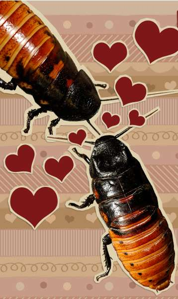 Insectual Romance Gifts - Name a Cockroach After Your Loved One With the Bronx Zoo