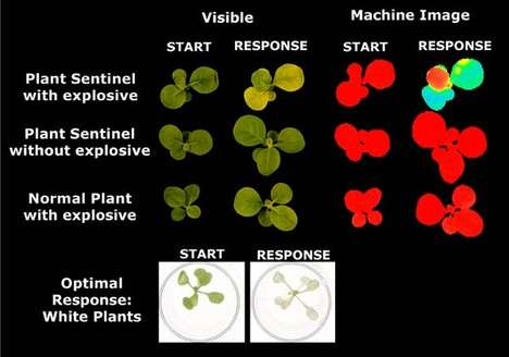 Plants That Detect Pollution