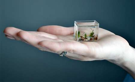 worlds smallest aquarium