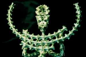 Aleksandr Tivodar Creates Some Bone-Chilling Works of Art