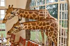 Get Upclose and Personal With Nature at the Giraffe Manor