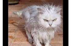 86 Feline Fixations