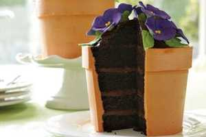 The Blooming Flower Pot Cake Sprouts With Sweetness