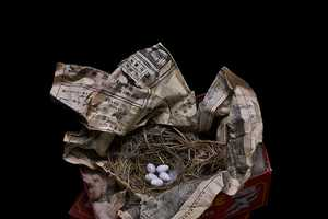 Sharon Beals Photographs the Assortment of Items Birds Use to Make a Home