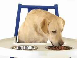 Doggy Highchair