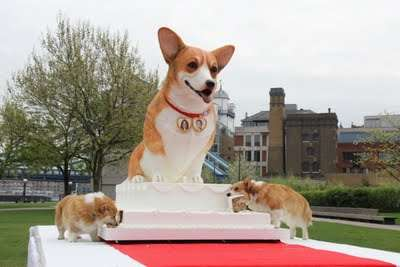 Corgi-Shaped Cake