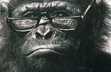 Chimp Smart