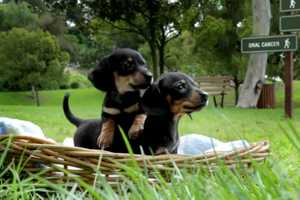 The Canadian Dental Association Puppies Commercial is All About Health