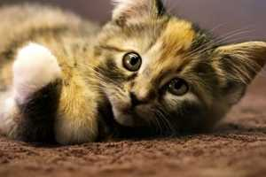 MAKE's Talking Kitten Commercial Will Have You Adopting Furry Friends