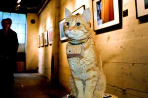 Cooper the Photographer Cat is a Kitty With a Passion for Pictures