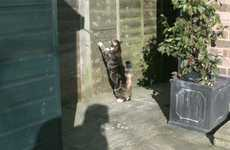Wall-Climbing Cats