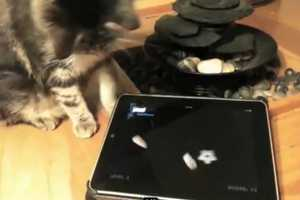 The Friskies iPad Game is the Purrfect Entertainment for You & Your Cat
