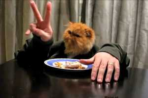 The Kitteh Has Human Hands Video Gives Famished Felines Forearms for Feeding