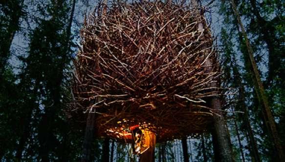 Tree Hotel 2
