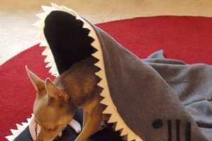 Pet Cosy Products Will Keep Your Pooch Comically Comfortable