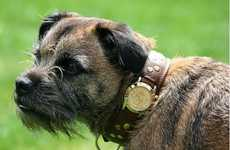 $4,120 Canine Collars
