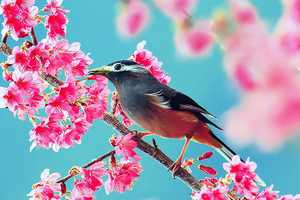 John & Fish Photography Boasts Beautiful Birds and Blossoms