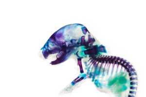 Iori Tomita Analyzes the Insides of Fish