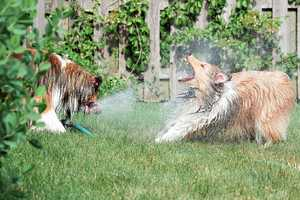 This Dogs vs. Sprinkler Series Will Leave You Short of Breath