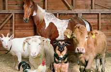 Farmhouse Family Photos - Rob Macinnis' Photography Shows Staged Barnyard Animals
