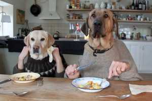 The Two Dogs Dining Video is Hilariously Humanlike