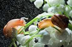Epic Snail Photography
