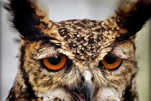 'Owls With Stupid Expressions On Their Faces' is Adorably Comedic