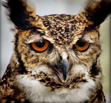 Owls with Stupid expressions