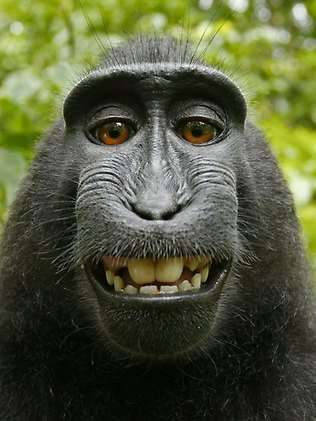 Monkey Takes Self-Portrait