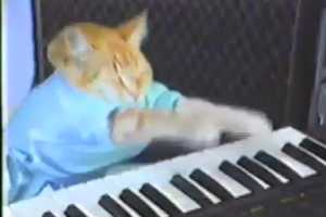 The 'Songify This' Video Further Mocks Debbie the eHarmony Cat Lady