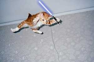 The Star Wars Animals Series Shows Animals Using the Force