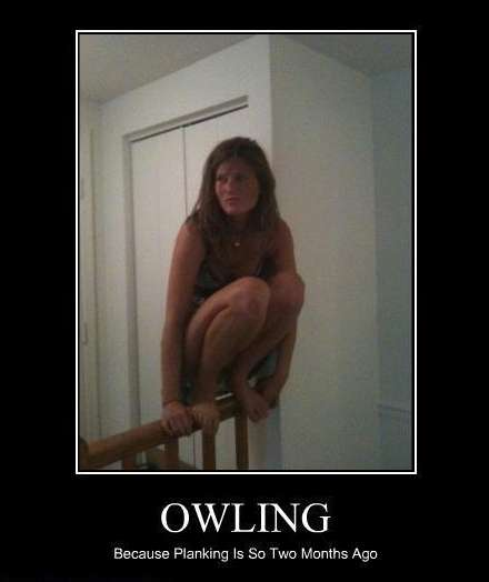 Owling Meme