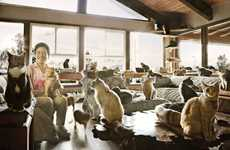Immense Feline Shelters - The Cat House on the Kings is the Largest Cat Rescue Center in the World