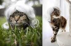 Hairpieces for Cats - Kitty Wigs