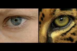This WWF Promotional Video Mirrors Urbanites to the Environment