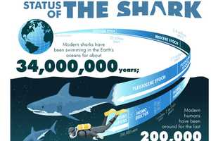 The 'Status of the Shark' Infographic Offers Some Jaw-Dropping Facts