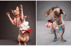 Polished Pet Portraits - Carli Davidson's Dogs and Cats is Full of Quirky Personalities