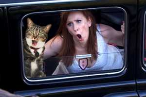 The 'Dr. Who With Cats' Blog Adds Furry Friends to Famous Scenes