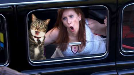 Feline Photobomb Blogs - The 'Dr. Who With Cats' Blog Adds Furry Friends to Famous Scenes